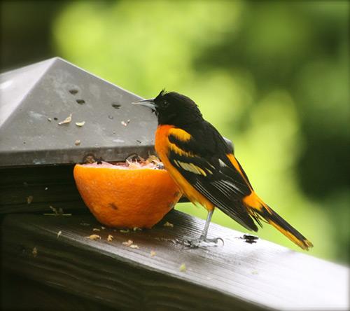 wildlife photographer in Kansas city